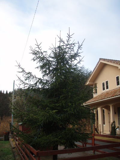 2009_776