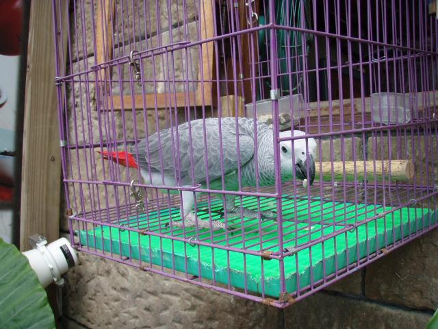 2009sato_2744